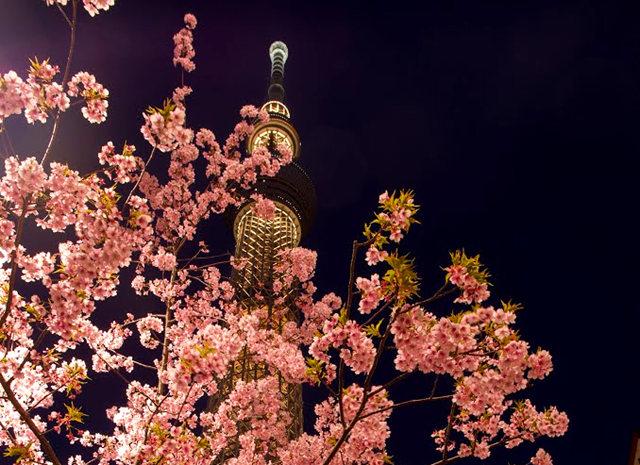 夜拍天空树_图1-6
