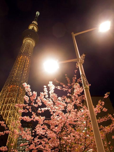 夜拍天空树_图1-8