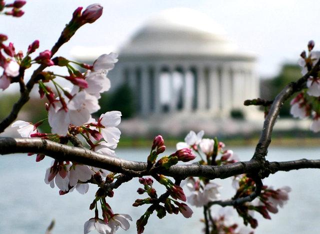 回顾去年华盛顿DC拍樱花_图1-7