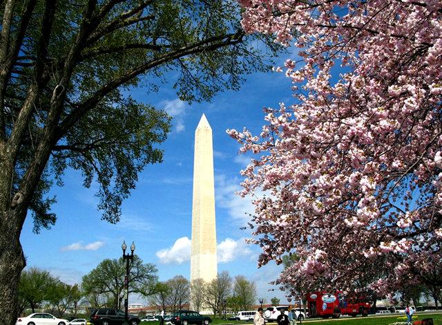 回顾去年华盛顿DC拍樱花_图1-16