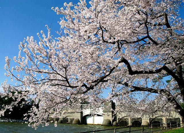 回顾去年华盛顿DC拍樱花_图1-23
