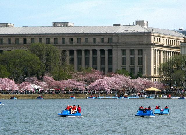 回顾去年华盛顿DC拍樱花_图1-25