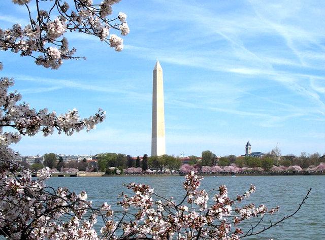 回顾去年华盛顿DC拍樱花_图1-27
