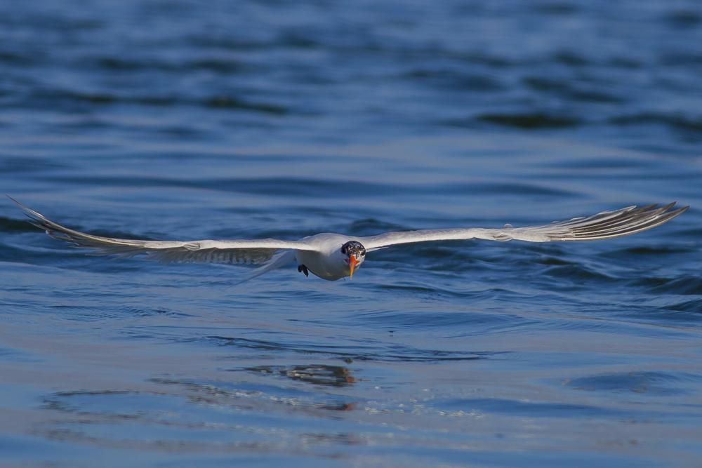 大部份燕鸥已陆续迁离,只有它们毅然留了下来!_图1-2