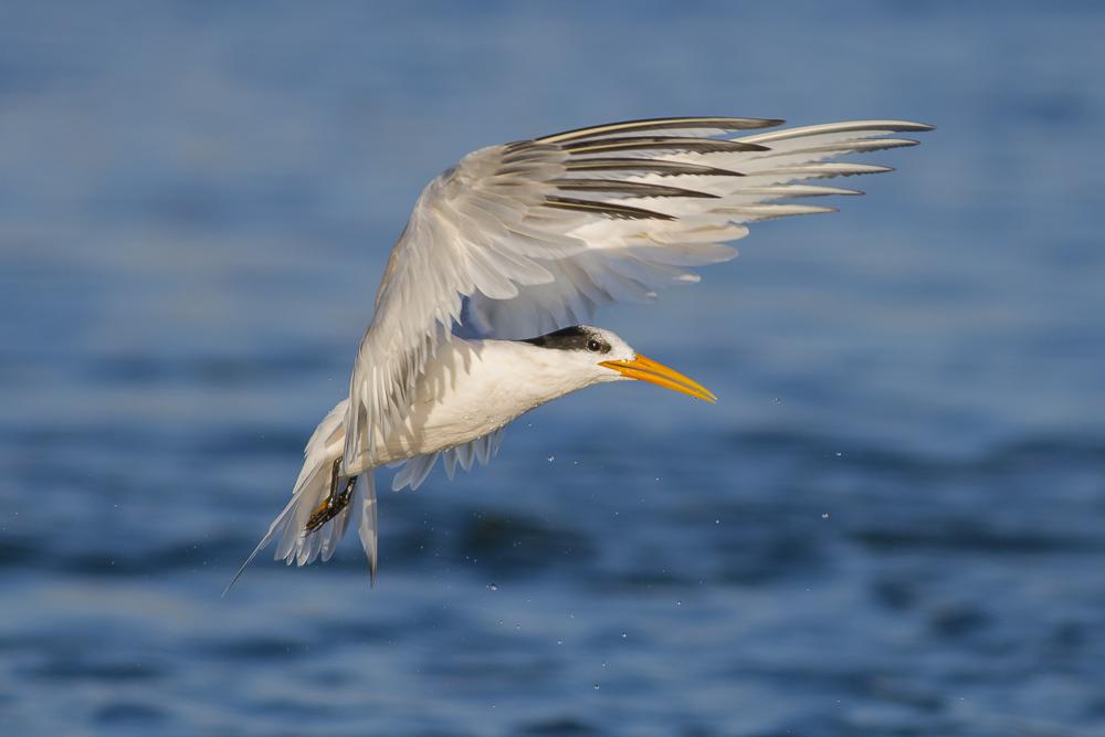 大部份燕鸥已陆续迁离,只有它们毅然留了下来!_图1-9