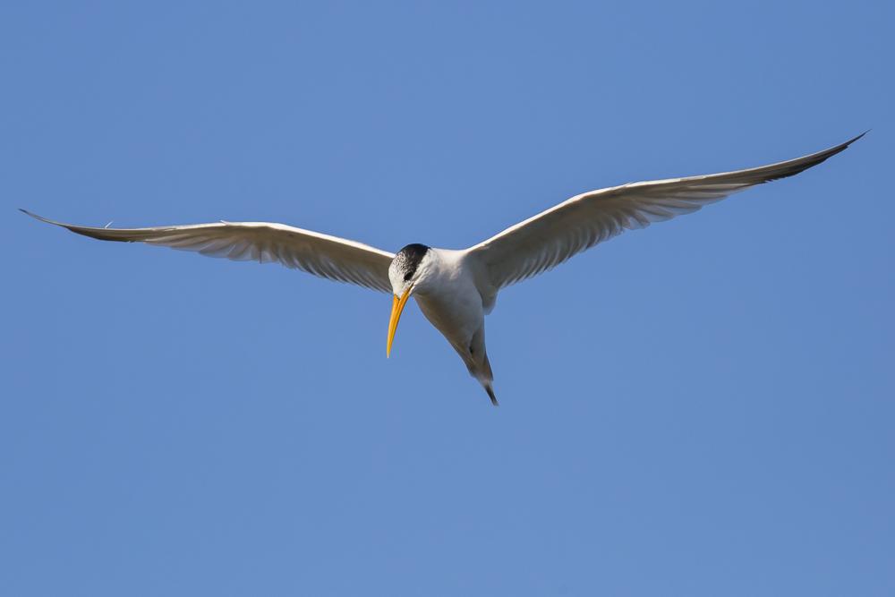 大部份燕鸥已陆续迁离,只有它们毅然留了下来!_图1-5