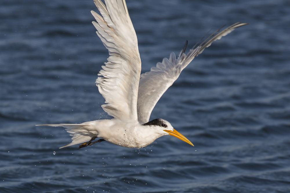 大部份燕鸥已陆续迁离,只有它们毅然留了下来!_图1-15