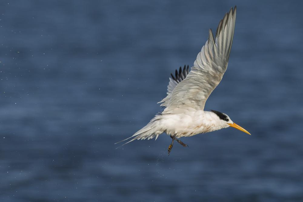 大部份燕鸥已陆续迁离,只有它们毅然留了下来!_图1-17