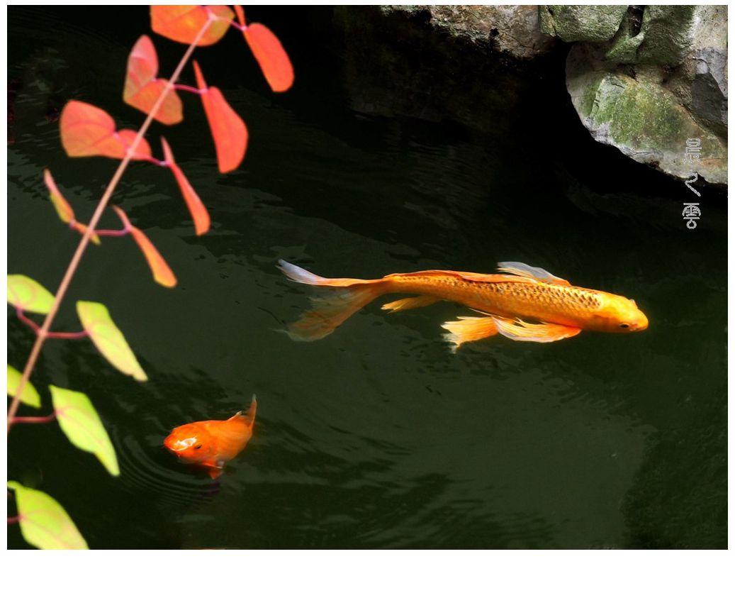 自由自在的鱼_图1-2