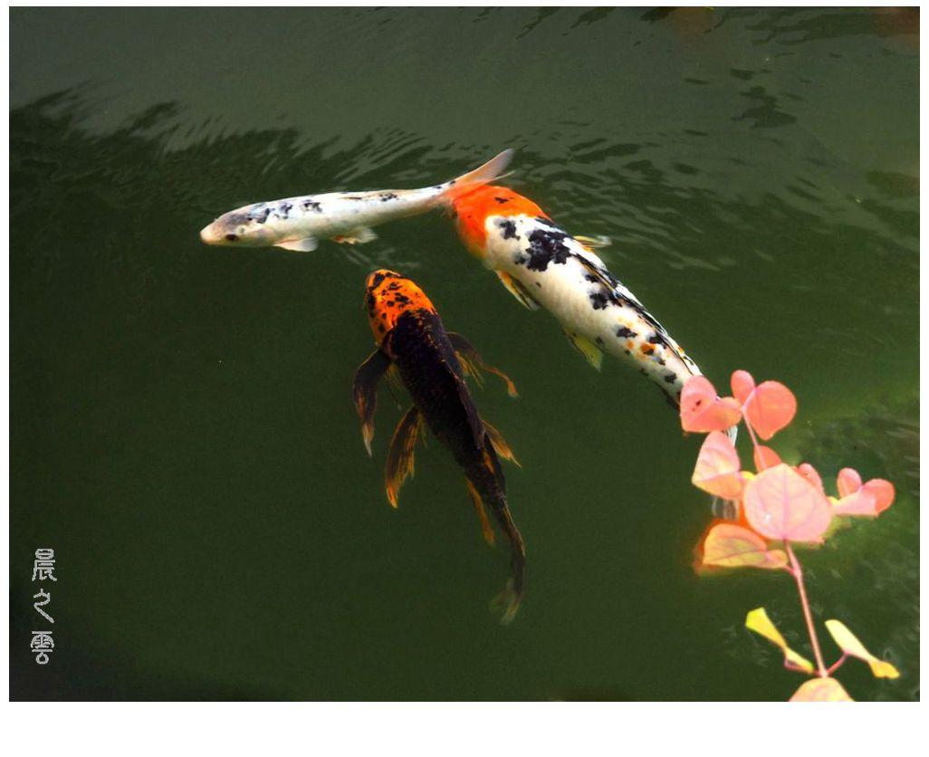 自由自在的鱼_图1-3