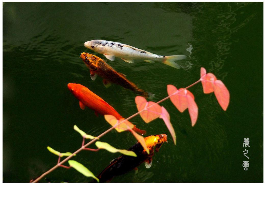 自由自在的鱼_图1-4