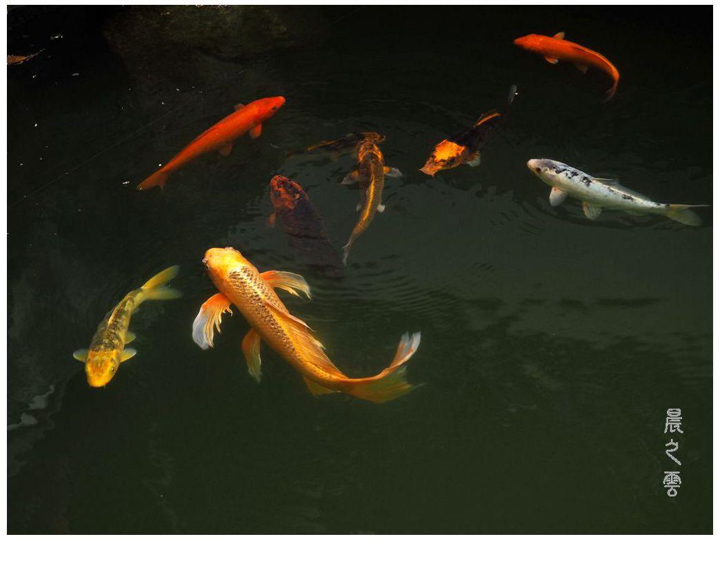 自由自在的鱼_图1-5