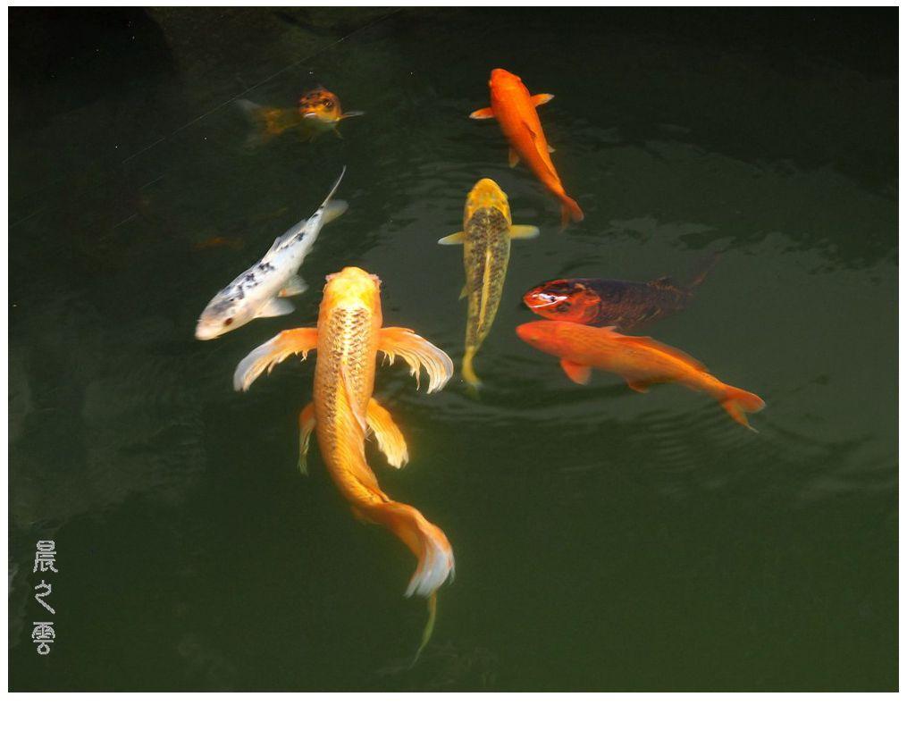 自由自在的鱼_图1-6