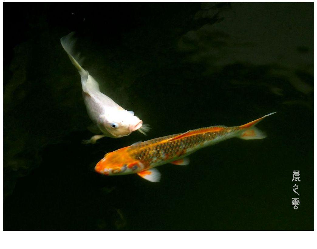 自由自在的鱼_图1-7