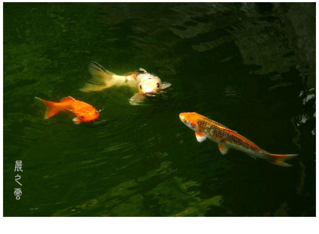 自由自在的鱼_图1-8