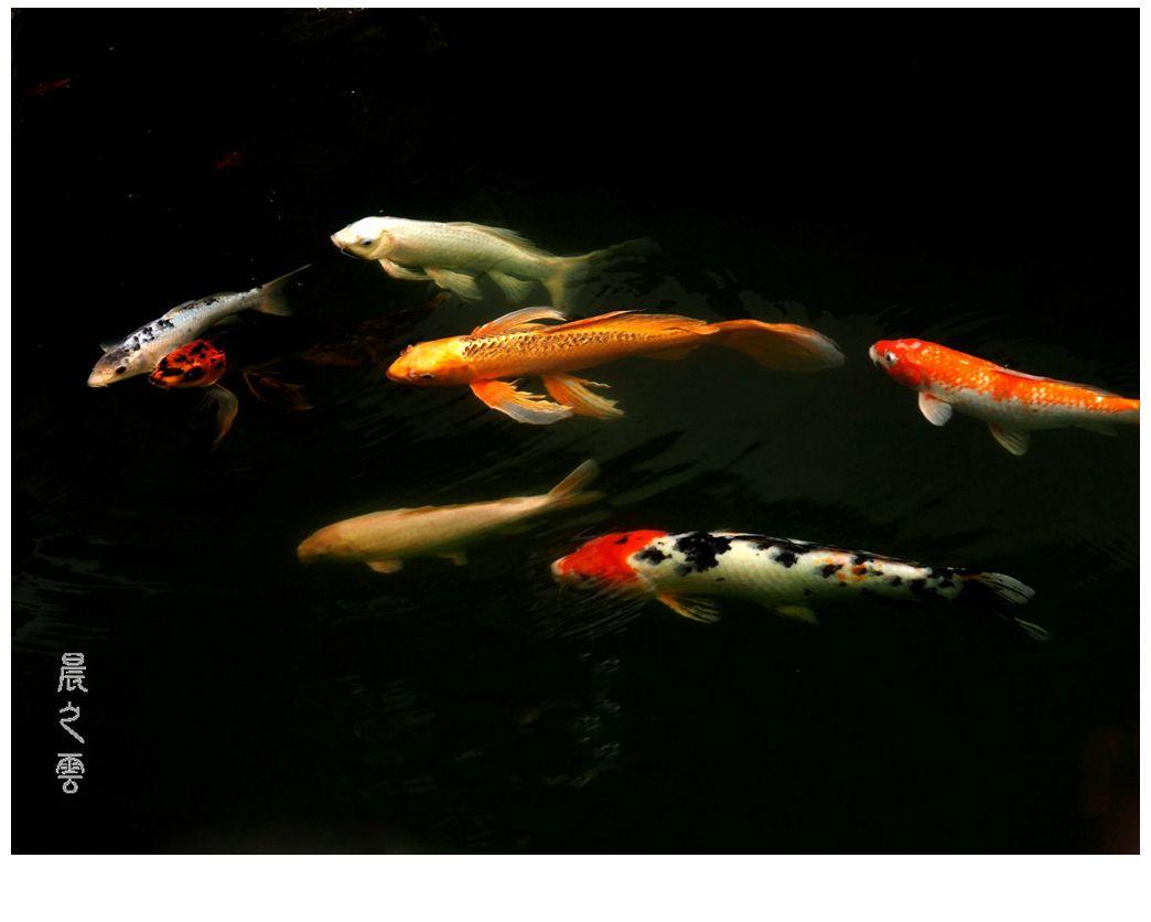 自由自在的鱼_图1-9