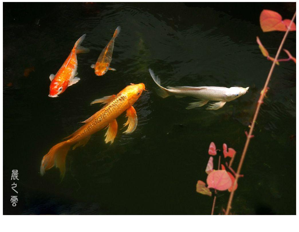 自由自在的鱼_图1-10