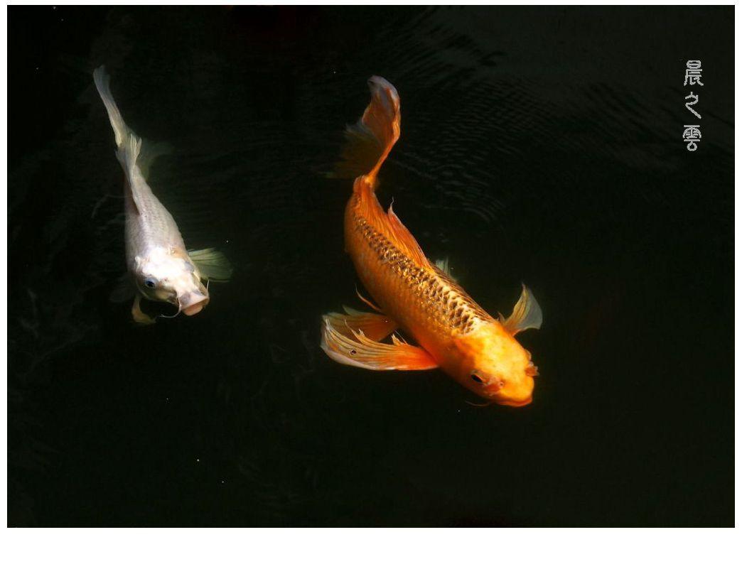 自由自在的鱼_图1-12