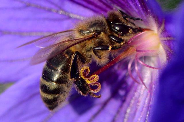 小蜜蜂_图1-1