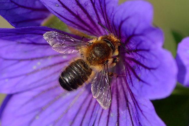 小蜜蜂_图1-2