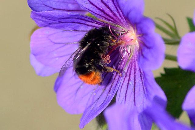 小蜜蜂_图1-3