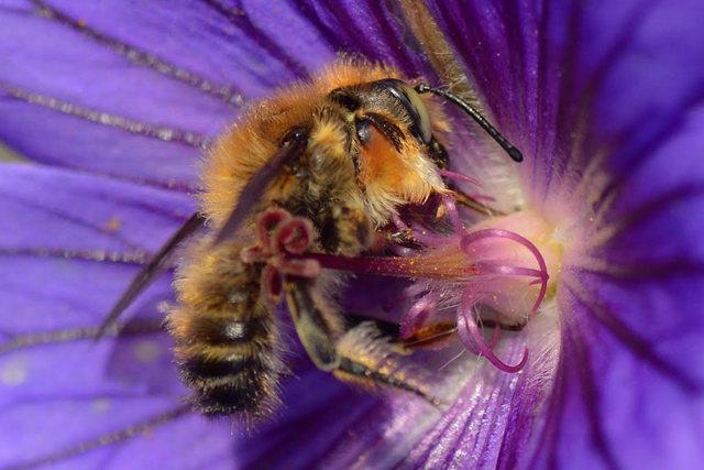 小蜜蜂_图1-4