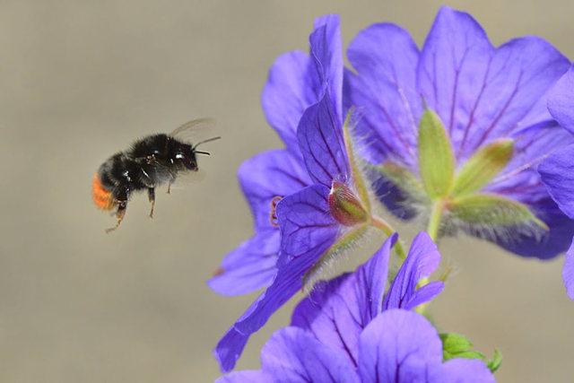 小蜜蜂_图1-5