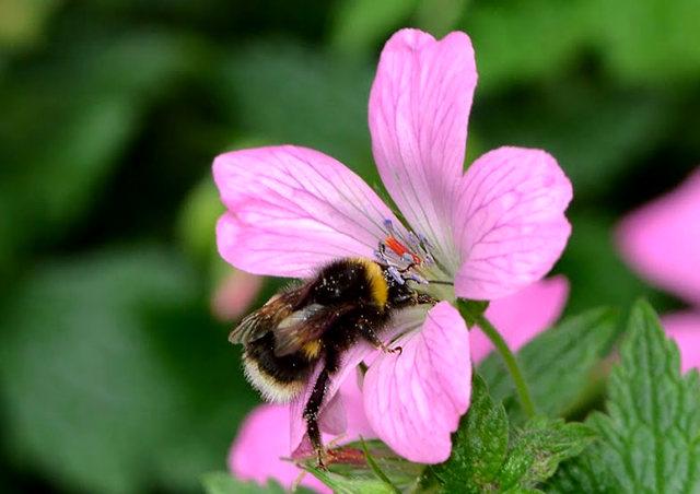 小蜜蜂_图1-6