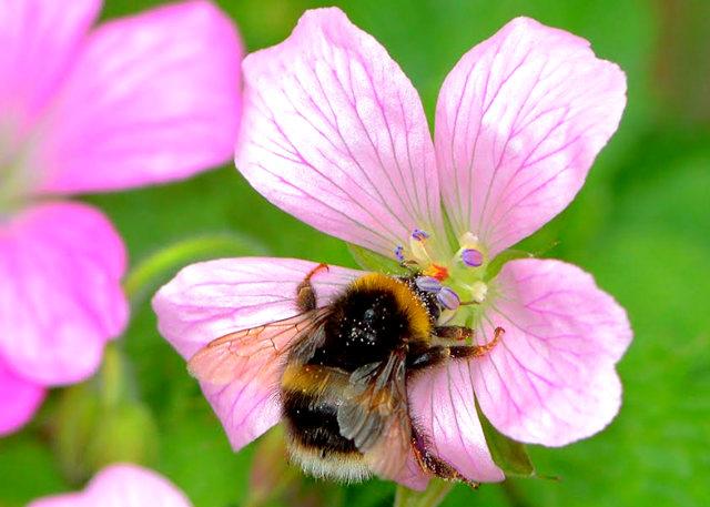 小蜜蜂_图1-7