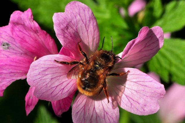 小蜜蜂_图1-8