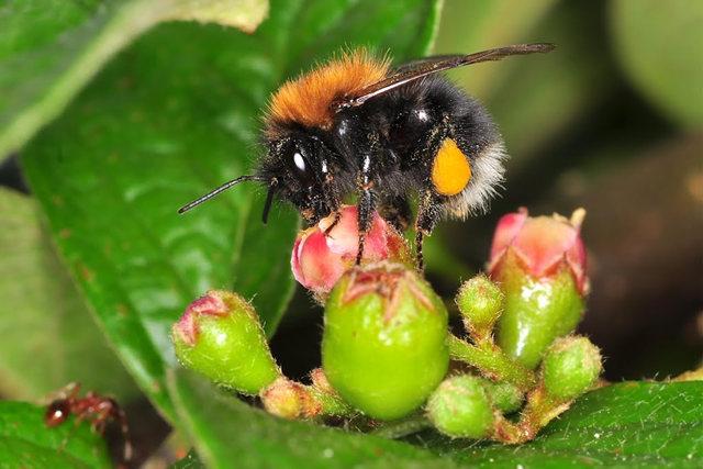 小蜜蜂_图1-11