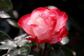 2010922 玫瑰园