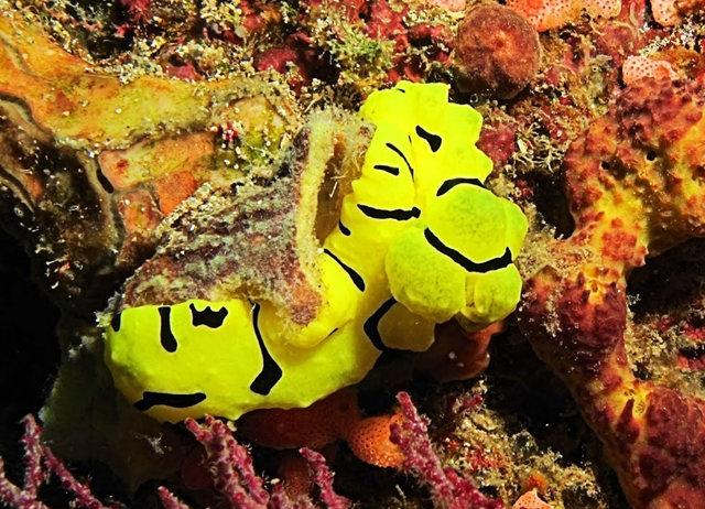 昆士兰大堡礁海底行......抓拍海蛞蝓_图1-4