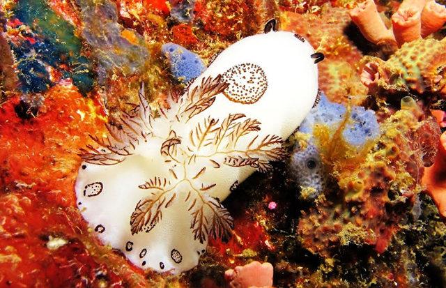 昆士兰大堡礁海底行......抓拍海蛞蝓_图1-9