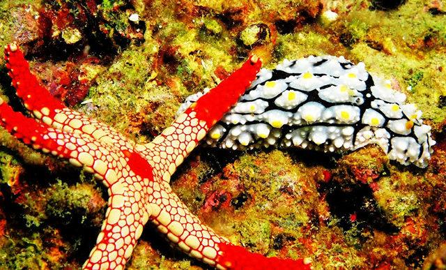 昆士兰大堡礁海底行......抓拍海蛞蝓_图1-16