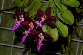 几种不常见的兰花