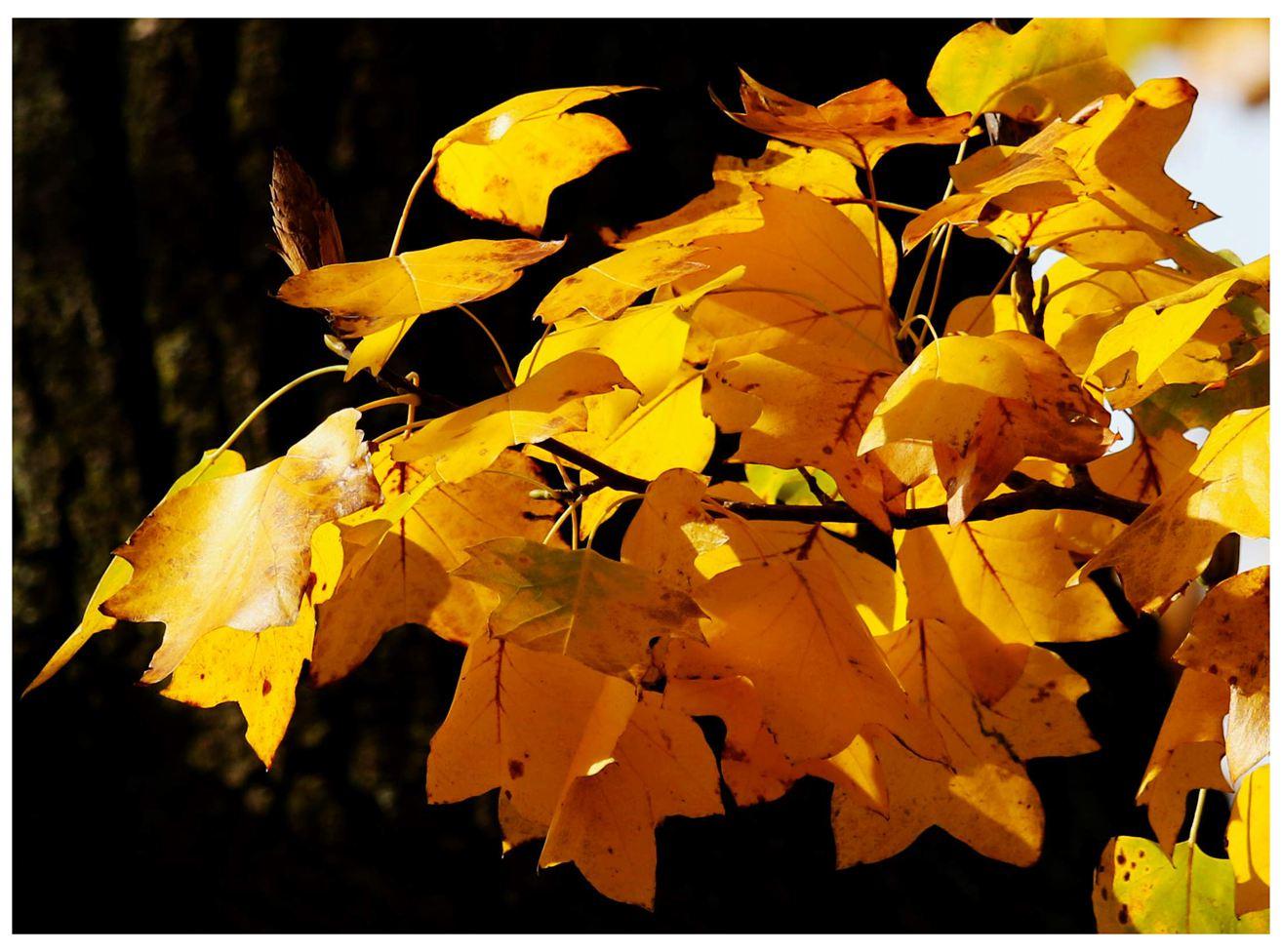 风光] 叶到红时勘比花—实拍美国东部深秋红叶_图1-1