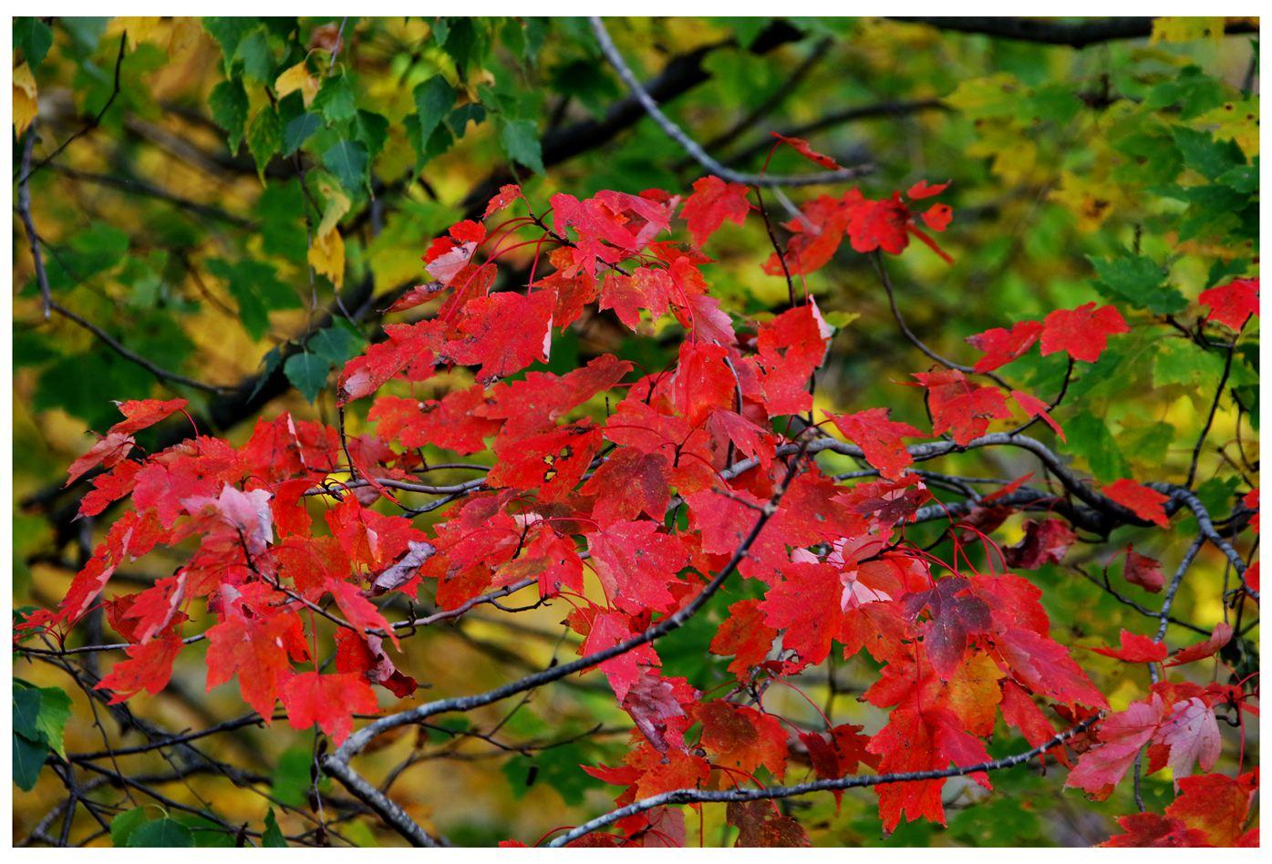 风光] 叶到红时勘比花—实拍美国东部深秋红叶_图1-2