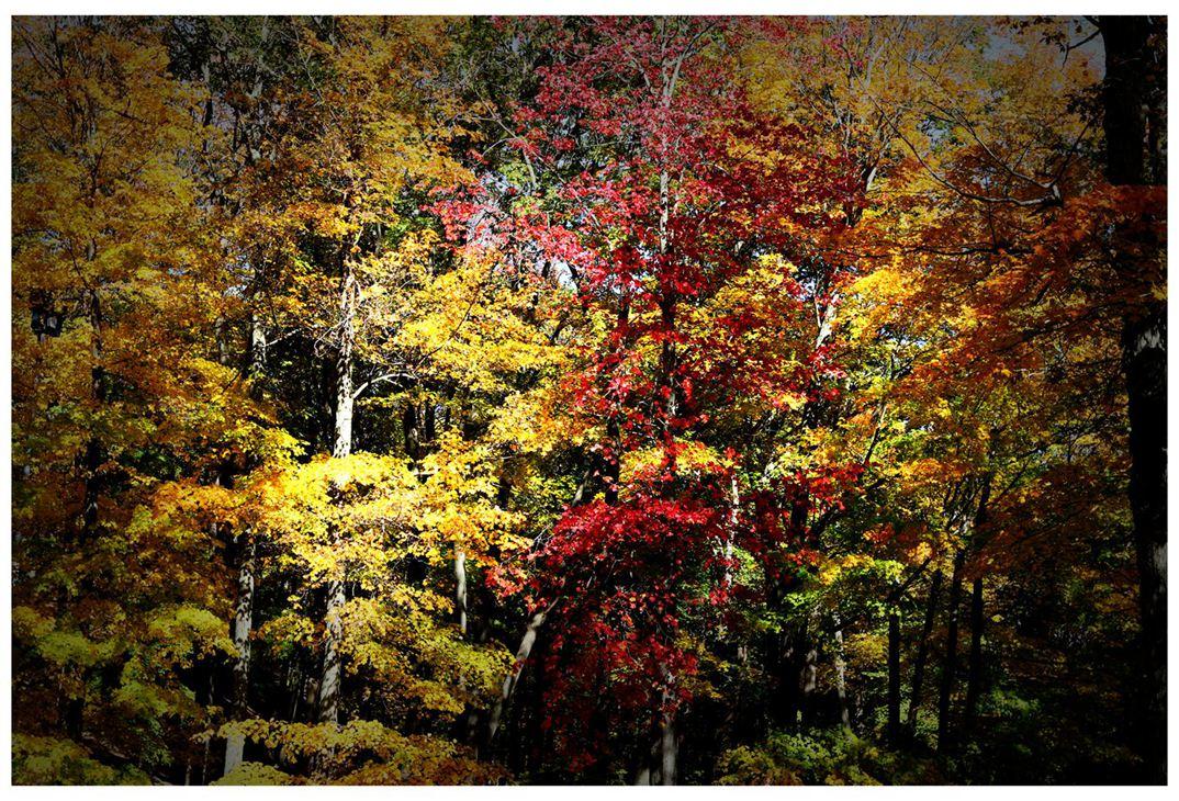 风光] 叶到红时勘比花—实拍美国东部深秋红叶_图1-3