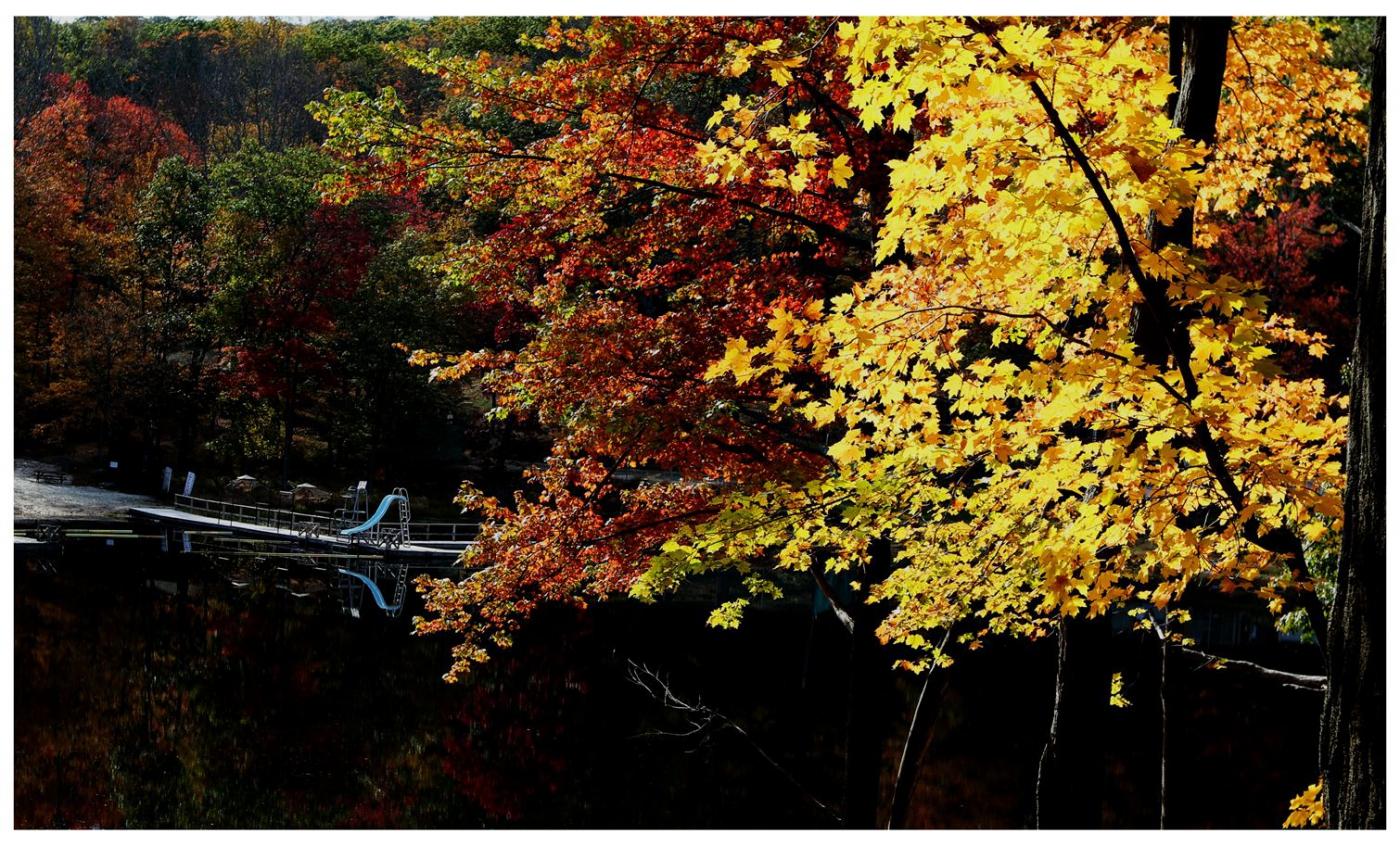风光] 叶到红时勘比花—实拍美国东部深秋红叶_图1-7