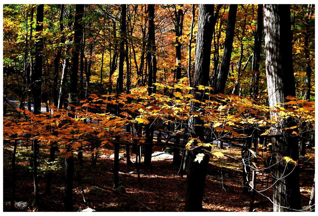 风光] 叶到红时勘比花—实拍美国东部深秋红叶_图1-8