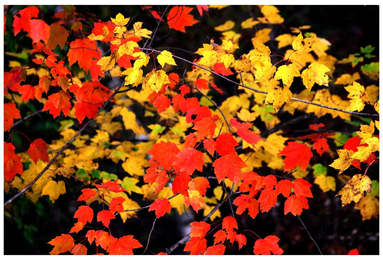 风光] 叶到红时勘比花—实拍美国东部深秋红叶_图1-9