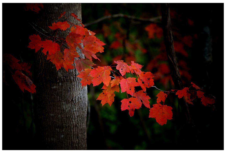 风光] 叶到红时勘比花—实拍美国东部深秋红叶_图1-13