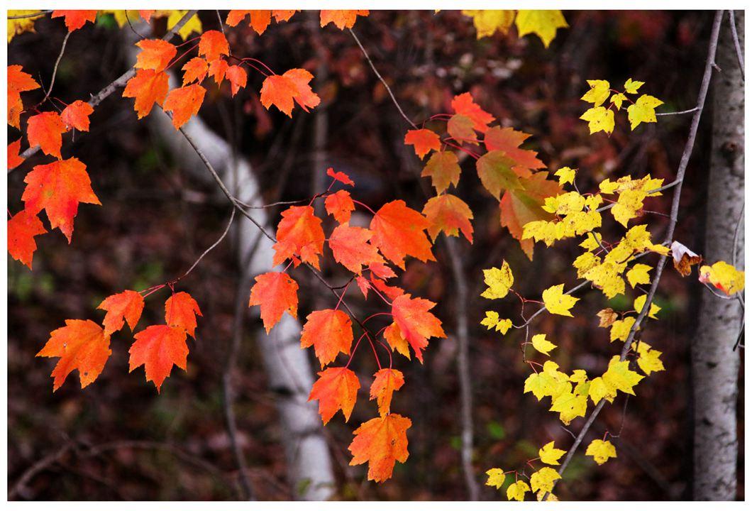 风光] 叶到红时勘比花—实拍美国东部深秋红叶_图1-12