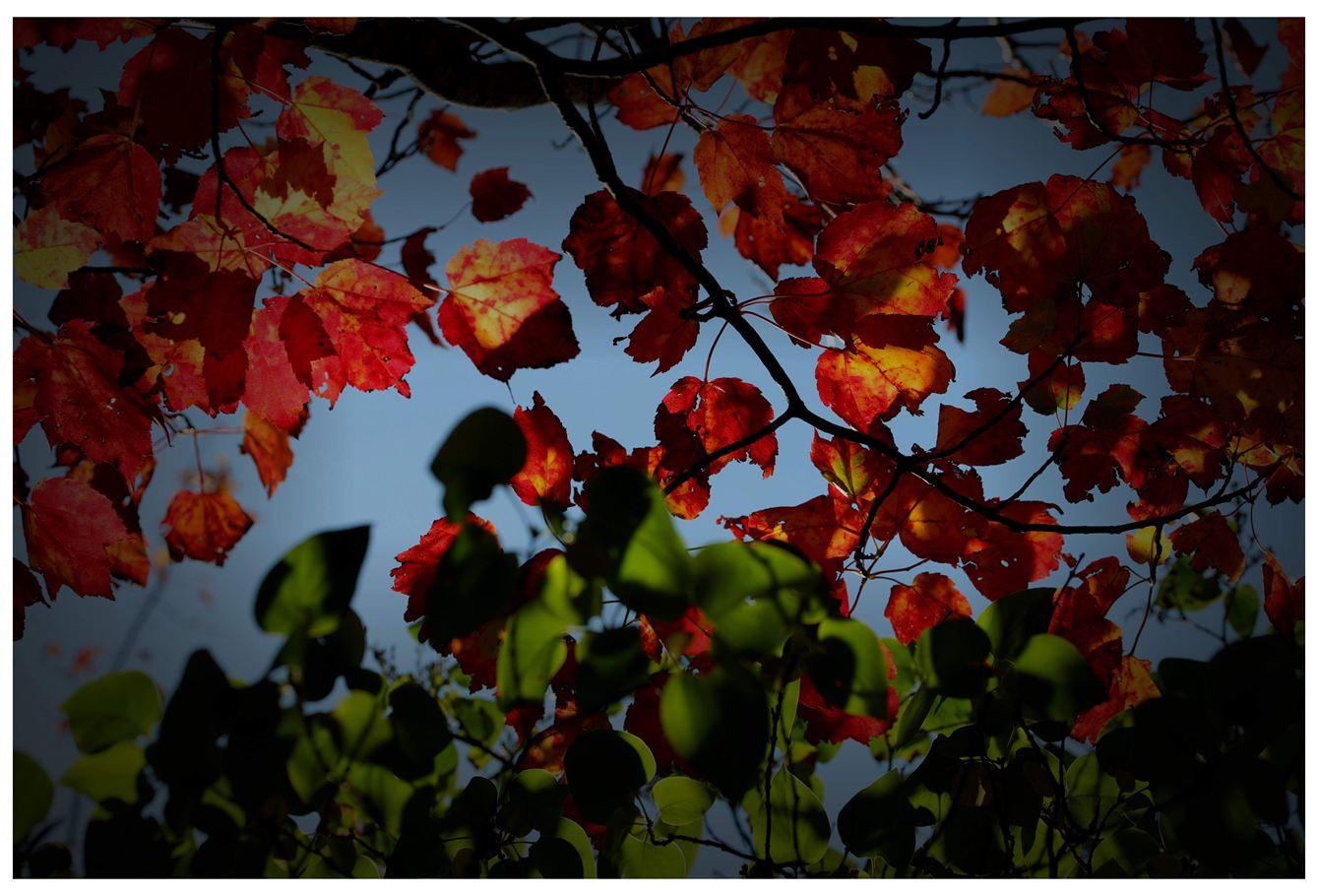 风光] 叶到红时勘比花—实拍美国东部深秋红叶_图1-14