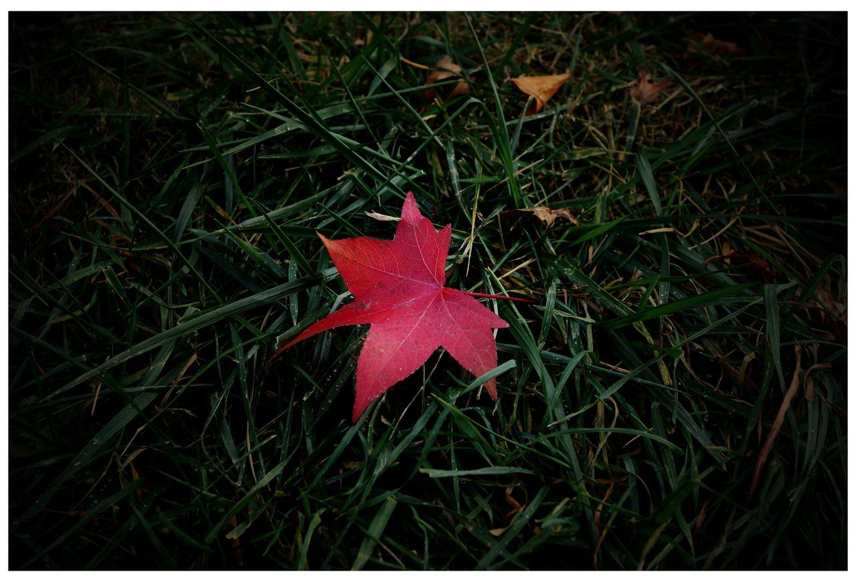风光] 叶到红时勘比花—实拍美国东部深秋红叶_图1-17