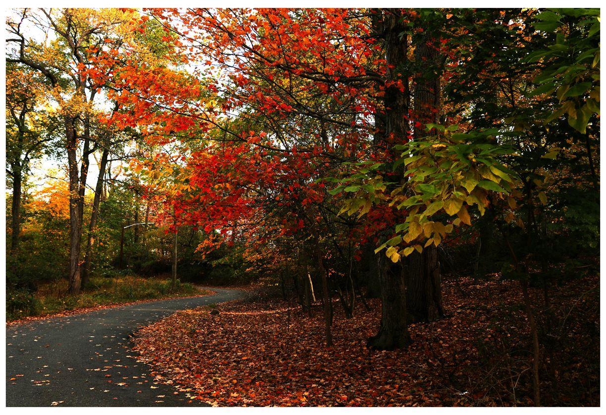 风光] 叶到红时勘比花—实拍美国东部深秋红叶_图1-20