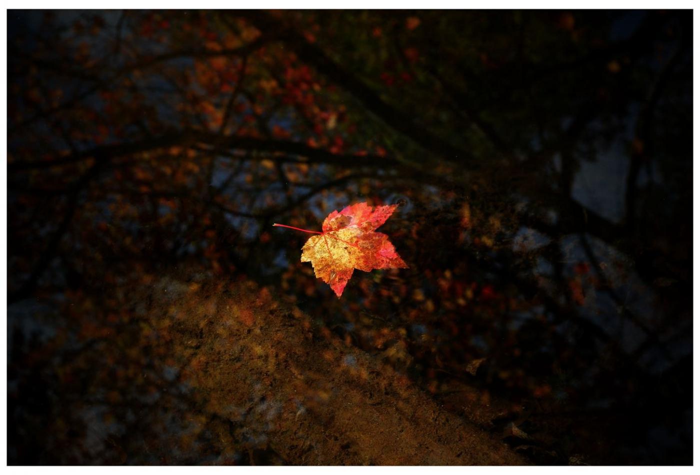 风光] 叶到红时勘比花—实拍美国东部深秋红叶_图1-21