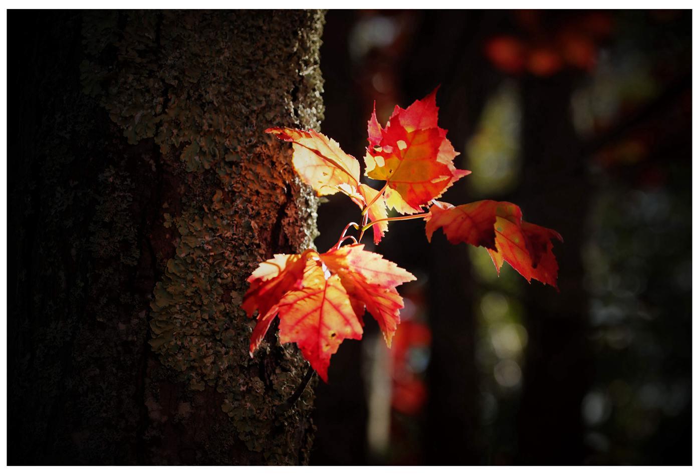 风光] 叶到红时勘比花—实拍美国东部深秋红叶_图1-24