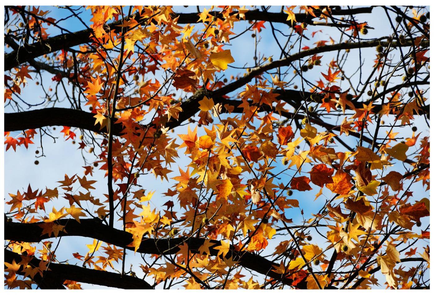 风光] 叶到红时勘比花—实拍美国东部深秋红叶_图1-25